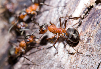 Ant Removal Las Vegas Nv Backyard