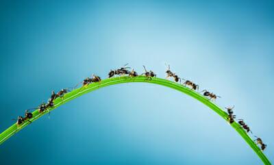 Pest Control Ants On Grass Las Vegas