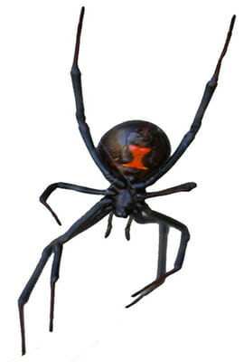 Spider Exterminator Las Vegas NV
